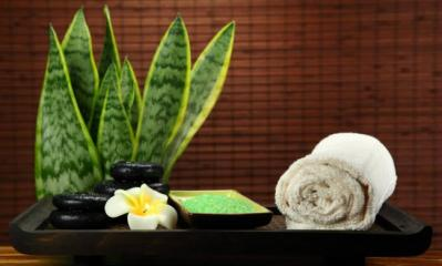las-mejores-plantas-para-el-bano-segun-el-feng-shui-4